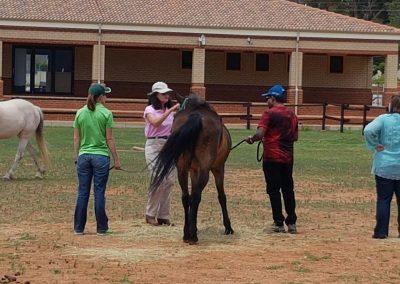 nedbank-horseplay1
